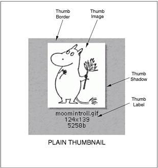 Thumb nail anatomy